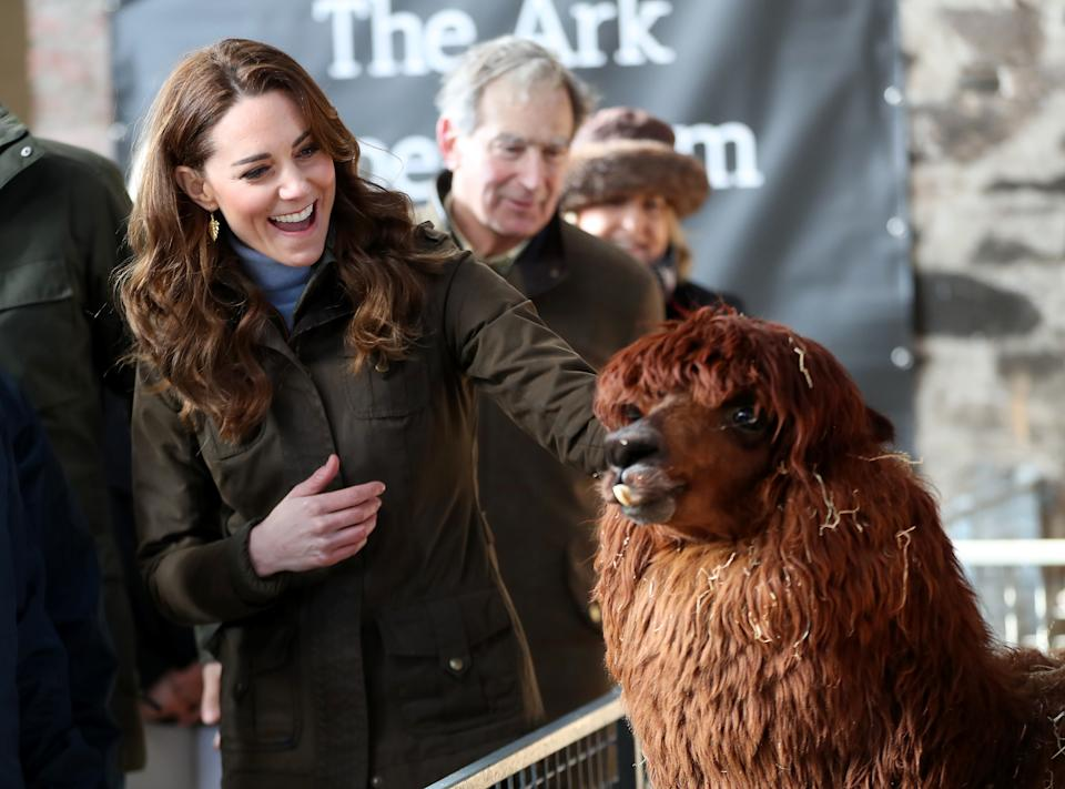 NEWTOWNARDS, NORTHERN IRELAND - FEBRUARY 12: Catherine, Duchess of Cambridge strokes an alpaca as she visits The Ark Open Farm on February 12, 2020 in Newtownards, Northern Ireland. This visit is part of her Early Years Foundation Survey.  (Photo by Chris Jackson/Getty Images)