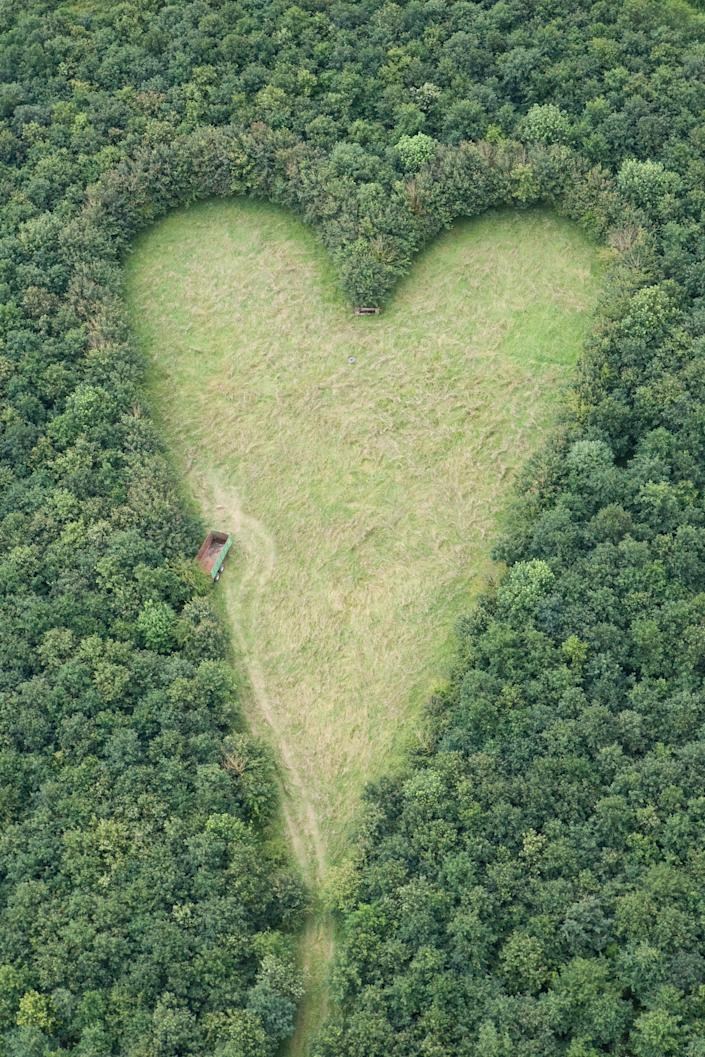 A giant heart formed with 6000 oak trees which Winston Howes planted in memory of his late wife Janet. (Adam Gray / SWNS.com)