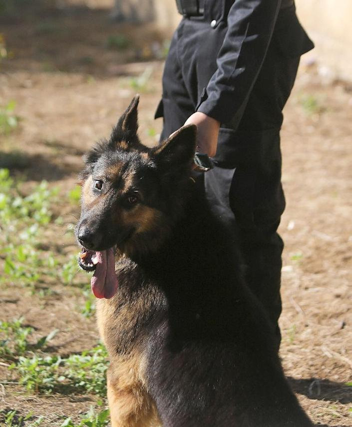 A new animal cloning plant in China will produce police dogs, as well as racehorses and cows, to be sold on the open market on an industrial scale (AFP Photo/Mahmud Hams)