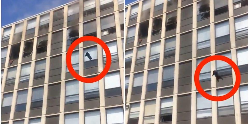 cat jumps from fifth floor of burning building