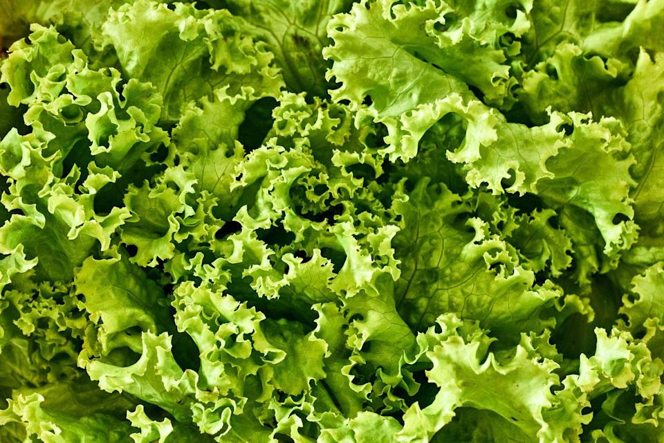 """<p>Looking for a plant that you can grow and eat? Eating homegrown produce is incredibly rewarding, so why not sow seeds for your own lettuce heads. You'll have a bountiful harvest in no time. </p><p><a class=""""link rapid-noclick-resp"""" href=""""https://www.dobies.co.uk/vegetable-seeds/lettuce-leaf-seeds/lettuce-seeds-mixture_mh-3606"""" rel=""""nofollow noopener"""" target=""""_blank"""" data-ylk=""""slk:BUY NOW VIA DOBIES"""">BUY NOW VIA DOBIES</a></p>"""