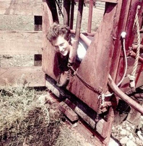 PHOTO: Dr. Temple Grandin in a 'squeeze machine' used to help animals stay calm at the ranch. (Courtesy Dr. Temple Grandin)