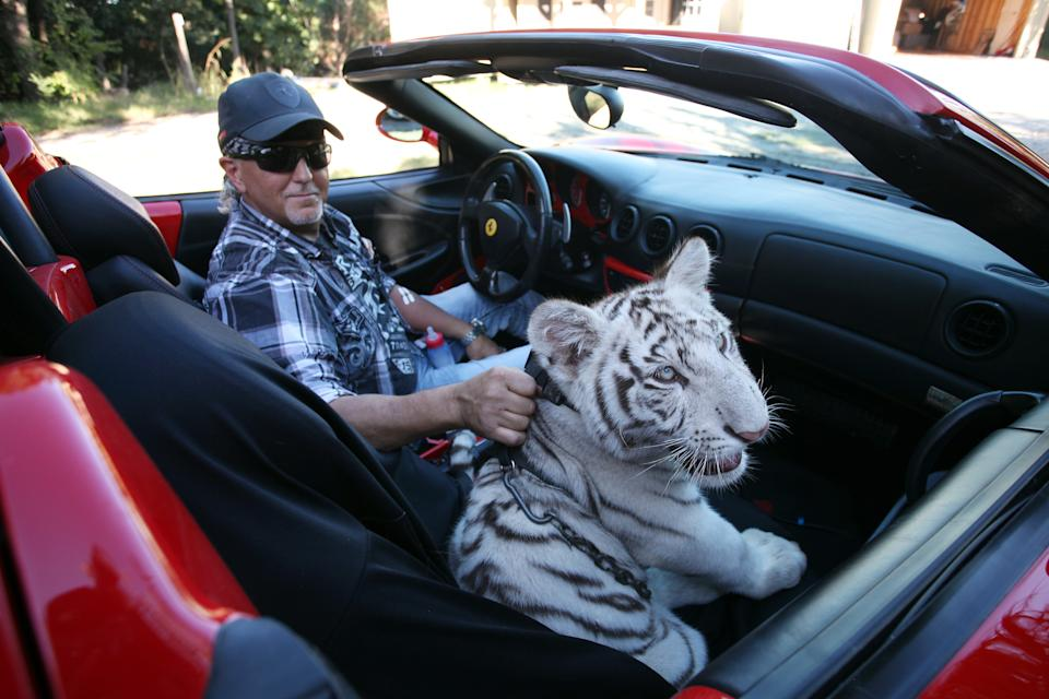 *** EXCLUSIVE - VIDEO AVAILABLE ***  WYNNEWOOD, OK - SEPTEMBER 28: Jeff Lowe with Prince the tiger in his Ferrari at the Greater Wynnewood Exotic Animal Park on September 28, 2016 in Wynnewood, Oklahoma.  ANIMAL lover Jeff Lowe provides care and shelter to more than 220 big cats - and they live in his back garden. 51-year-old Jeff owns the Greater Wynnewood Exotic Animal Park in Oklahoma, one of the largest private zoos in the world that rescues and protects over 500 wild animals, from tigers and lions to bears and crocodiles. Jeff, a multimillionaire, spends his days closely interacting with the most dangerous animals, walking them on leads inside his cabin house and laying in and around their enclosures  he even takes his smaller tigers to the vets in his Ferrari. Lauren Dropla, Jeffs 25-year-old fiancé, offers a helping hand with looking after their exotic pets and maintaining the park on a daily basis.  PHOTOGRAPH BY Ruaridh Connellan / Barcroft Images  London-T:+44 207 033 1031 E:hello@barcroftmedia.com - New York-T:+1 212 796 2458 E:hello@barcroftusa.com - New Delhi-T:+91 11 4053 2429 E:hello@barcroftindia.com www.barcroftimages.com (Photo credit should read Ruaridh Connellan/BarcroftImages / Barcroft Media via Getty Images)