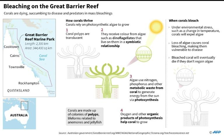 Bleaching on the Great Barrier Reef