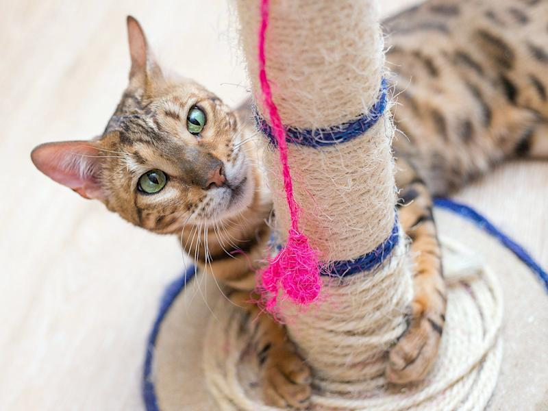 cat with toy string scratcher