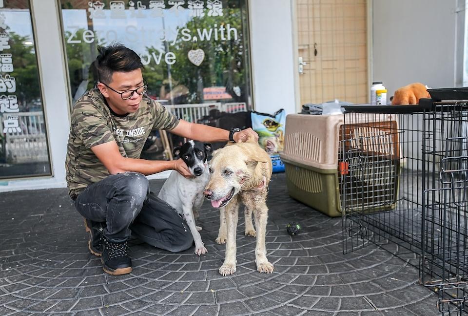 Mutts and Mittens president Chong Choon Kit at the adoption centre set up to give local breed dogs a better chance to be adopted.