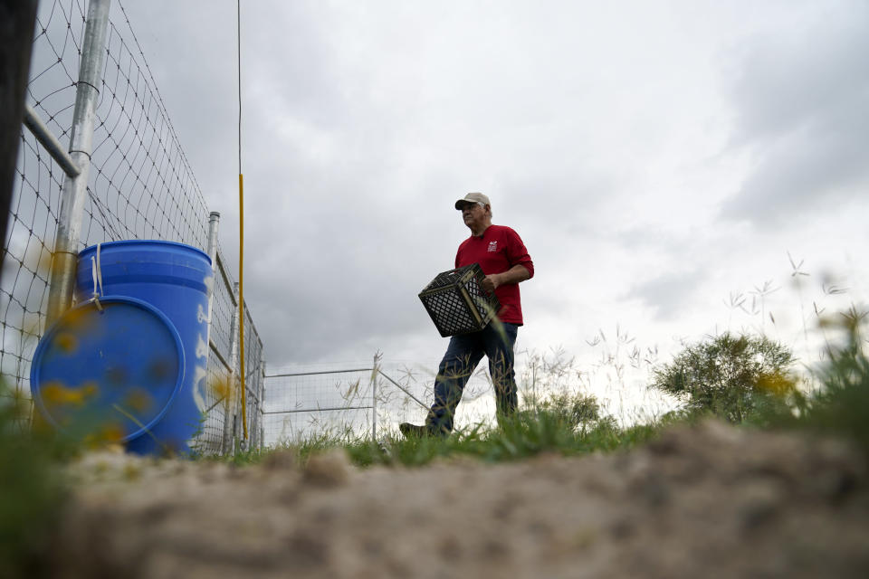 Migrant rights activist Eduardo Canales carries jugs of water to a blue water drop Saturday, May 15, 2021, in Falfurrias, Texas. Every week, Canales fills up blue water drums that are spread throughout a vast valley of Texas ranchlands and brush. They are there for migrants who venture into the rough terrain to avoid being caught and sent back to Mexico. (AP Photo/Gregory Bull)