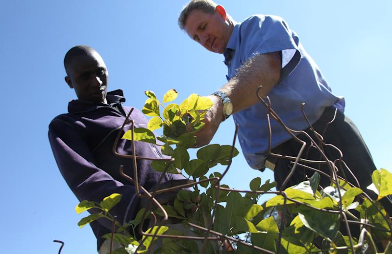 """in this photo taken Monday, June 3, 2013, golf club manager, Ian Mathieson, right, and green keeper Fibion Chikwaya look at a newly planted indigenous tree at the Royal Harare Golf Club. """"Alien'' trees are being cut down and replaced with trees """"indigenous"""" to Zimbabwe. (AP Photo/Tsvangirayi Mukwazhi)"""