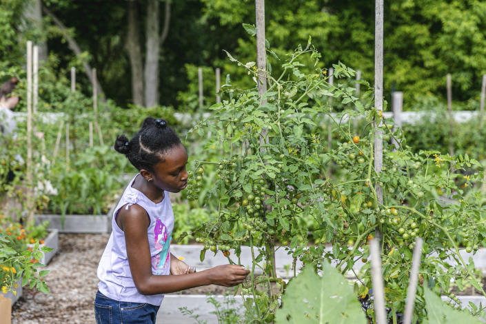 This photo released by The New York Botanical Garden shows schoolchildren learning about growing food in the garden's 3-acre Edible Academy. (The New York Botanical Garden via AP)