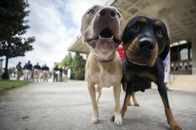These two pets were lucky enough to have owners who registered them for pet evacuation at a facility in Savannah, Ga. Other pets abandoned in Palm Beach, Fla, weren't so lucky. (Photo: AP)