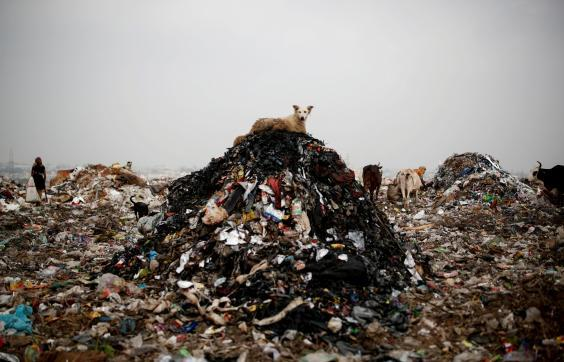 A dog rests on a pile of rubbish (Reuters)