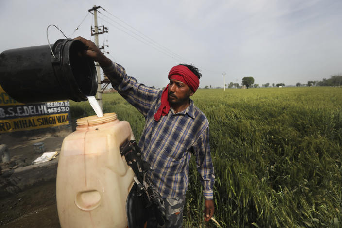 A laborer prepares pesticide to spray in standing wheat crop in Moga district of Indian state of Punjab, Saturday, March 13, 2021. India is home to a fifth of the world's population but has only 4% of the world's water. The country is the largest extractor of groundwater in the world, and 90% of it is used for agriculture. And nowhere is the water shortage more pronounced than in Punjab state, where the India encouraged the cultivation of wheat and rice in the 1960s and has since been buying the staples at fixed prices to shore up national reserves. (AP Photo/Manish Swarup)