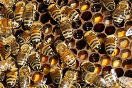File photo of bees on their hive in Paris