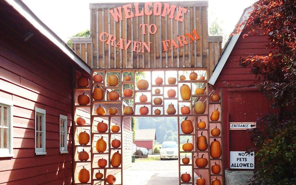 """<p>Starting in mid-September, <a href=""""https://www.cravenfarm.com/"""" rel=""""nofollow noopener"""" target=""""_blank"""" data-ylk=""""slk:Craven's Farm"""" class=""""link rapid-noclick-resp"""">Craven's Farm</a> in <a href=""""https://go.redirectingat.com?id=74968X1596630&url=https%3A%2F%2Fwww.tripadvisor.com%2FTourism-g58747-Snohomish_Washington-Vacations.html&sref=https%3A%2F%2Fwww.countryliving.com%2Flife%2Ftravel%2Fg21273436%2Fpumpkin-farms-near-me%2F"""" rel=""""nofollow noopener"""" target=""""_blank"""" data-ylk=""""slk:Snohomish, Washington"""" class=""""link rapid-noclick-resp"""">Snohomish, Washington</a>, kicks off their <a href=""""https://www.countryliving.com/life/travel/g2588/best-fall-festivals/"""" rel=""""nofollow noopener"""" target=""""_blank"""" data-ylk=""""slk:Harvest Festival"""" class=""""link rapid-noclick-resp"""">Harvest Festival</a> with a 50-plus variety pumpkin patch, a 15-acre corn maze, hayrides, and much more. Kids will love using the farm's apple slingers, which propel apples up high across the farm. </p><p><a class=""""link rapid-noclick-resp"""" href=""""https://go.redirectingat.com?id=74968X1596630&url=https%3A%2F%2Fwww.tripadvisor.com%2FAttractions-g58747-Activities-Snohomish_Washington.html&sref=https%3A%2F%2Fwww.countryliving.com%2Flife%2Ftravel%2Fg21273436%2Fpumpkin-farms-near-me%2F"""" rel=""""nofollow noopener"""" target=""""_blank"""" data-ylk=""""slk:PLAN YOUR TRIP"""">PLAN YOUR TRIP</a><br></p>"""
