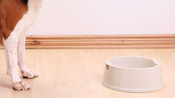PHOTO: A dog with a food bowl in an undated stock photo. (STOCK PHOTO/Getty Images)