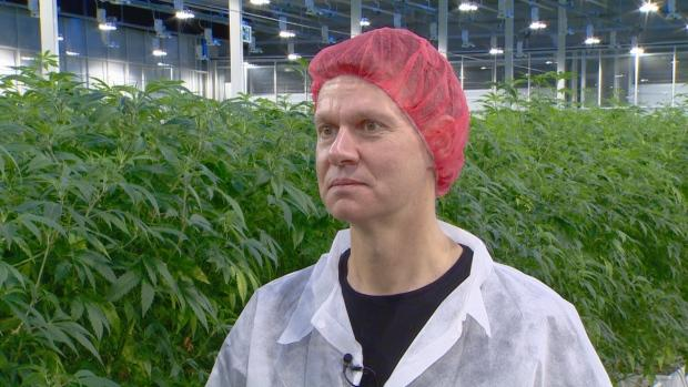Image result for Aurora Sky's the limit at massive cannabis facility built to harness the power of the sun