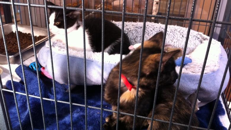 Edmonton's boxcar kittens adopted together
