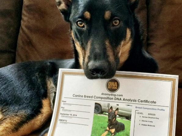 You'll receive a photo certificate that you and your furry friend will be proud to display (Photo: Yahoo Lifestyle Shop)