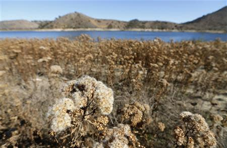 The receding water line of Lake Hodges is seen in San Diego County January 17, 2014. REUTERS/Mike Blake