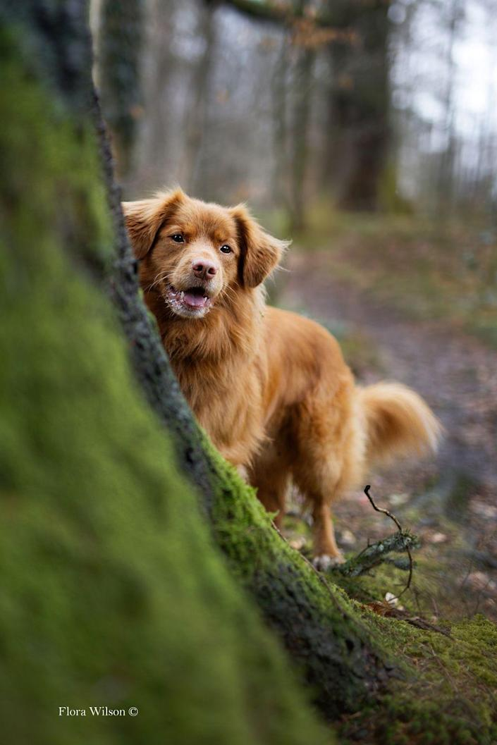 <p>A teenager from Wiltshire captured this beautiful image of Retriever Buddy when out on a woodland walk. </p>