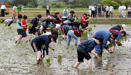 Tourists from Tokyo's universities, plant rice seedlings in a paddy field, near Tokyo Electric Power Co's (TEPCO) tsunami-crippled Fukushima Daiichi nuclear power plant, during a rice planting event in Namie town, Fukushima prefecture, Japan May 19, 2018. Picture taken May 19, 2018.  REUTERS/Toru Hanai