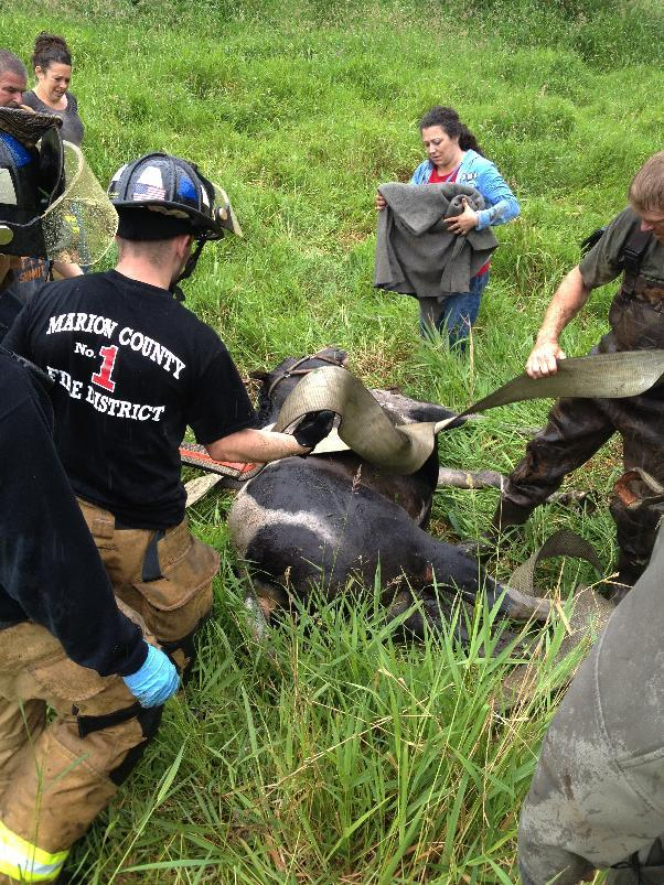 Missy the horse back on solid ground. (AP Photo/Marion County Fire District No. 1)