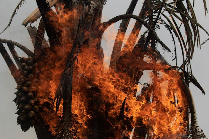 View of one of the fires, in the Amazon of Rondonia, Brazil, Aug. 24, 2019. (Photo: Joedson Alves/EFE via ZUMA Press)