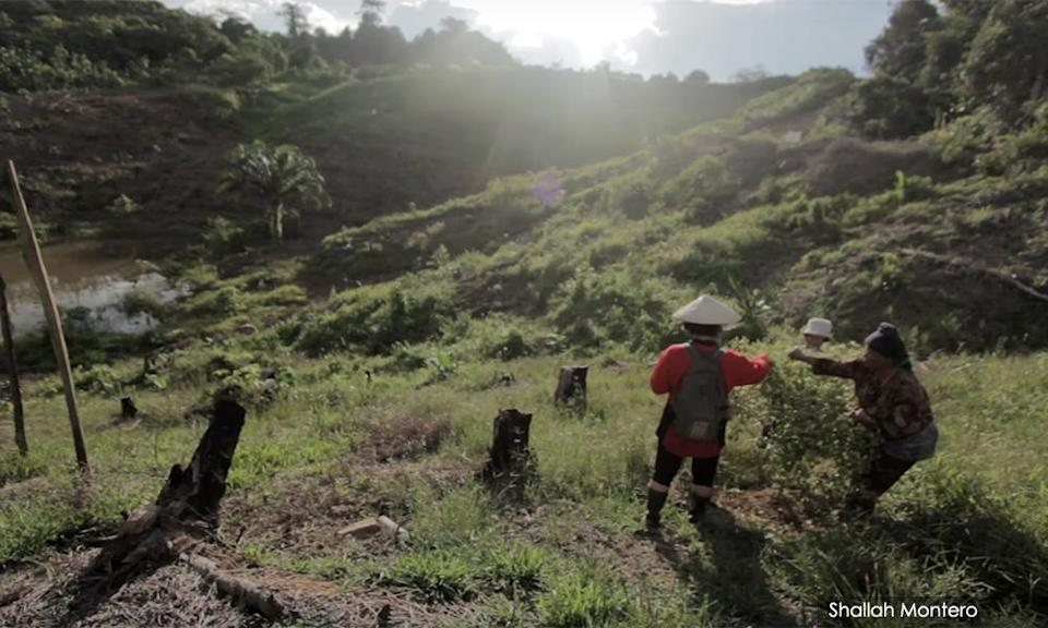 Indigenous women foraging from the forest in Sarawak from 'Women of The Forest', a documentary of the Arrow research