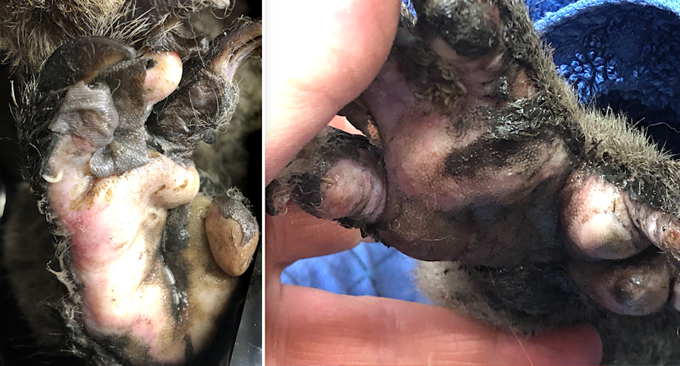 Split screen showing two images of burnt paws.