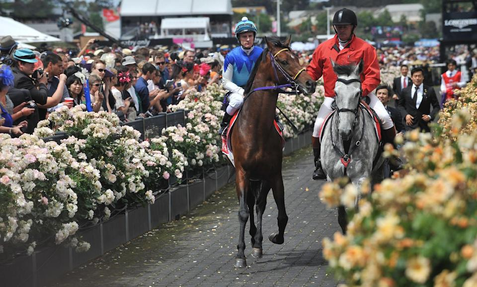 Racing favourite Admire Rakti (C) walks to the track for the start of the Melbourne Cup horse race in Melbourne, Australia, on November 4, 2014 (AFP Photo/Paul Crock)