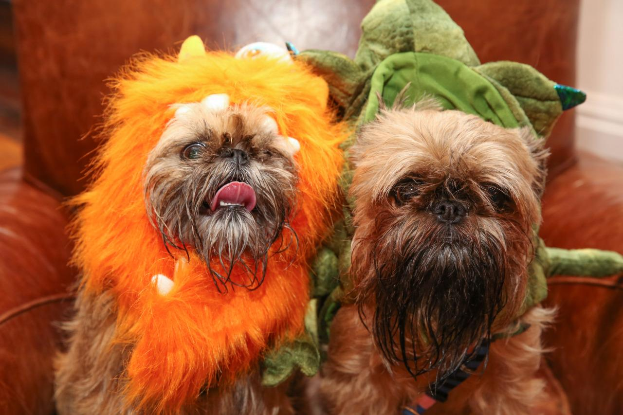 <p>Their parents better be taking them trick-or-treating this year! <i>(Photo: Petsmart)</i></p>