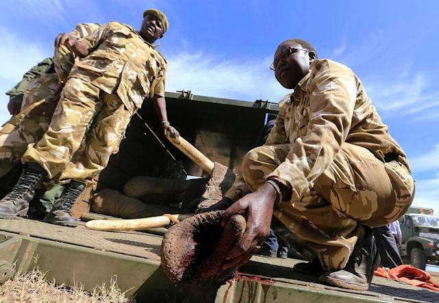 <p>A Kenya Wildlife Service (KWS) veterinary monitors the breathing of a tranquillized elephant during a translocation exercise to Ithumba Camp in Tsavo East National Park, in Solio Ranch in Nyeri County, Kenya, Feb. 21, 2018. (Photo: Thomas Mukoya/Reuters) </p>
