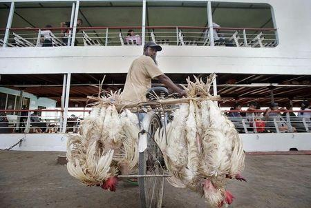 A man hangs chickens upside down on the back of his bicycle as he proceeds to board a ferry that crosses the Yangon river, in Yangon
