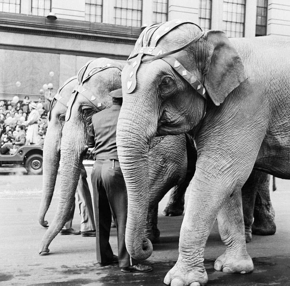 <p>In the first year, animals were borrowed from the Central Park zoo (think elephants, monkeys, camels, bears—you name it).</p>