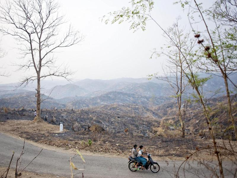 The remains of a forest where teak trees once grew in Bago, Burma (Getty)