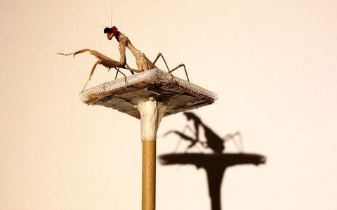 The insect was fitted with miniature 3D glasses - Credit: Mike Urwin