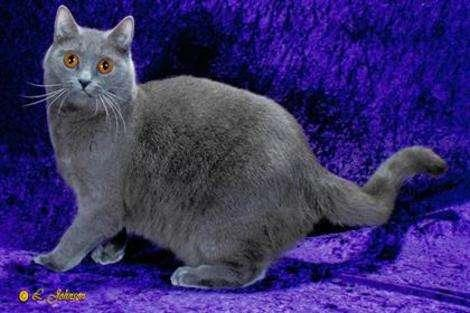 Killer Cats: 10 Best Hunting and Mouser Breeds