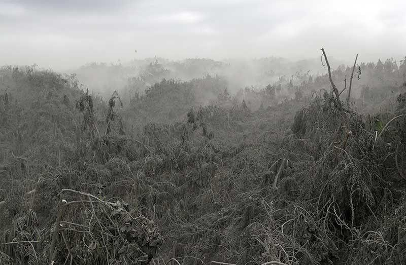Taal eruption destroys P74-M agri products