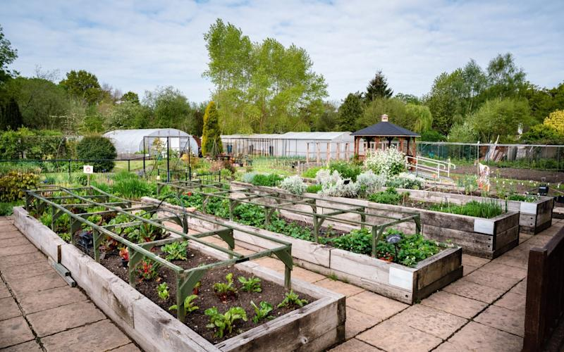 The Therapy Garden, a horticultural and education charity in Guildford, Surrey - Julie A Skelton