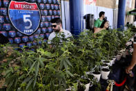 FILE - This Oct. 20, 2018, file photo shows marijuana clone plants displayed for sale by Interstate 5 Farms at the cannabis-themed Kushstock Festival at Adelanto, Calif. The leading cannabis industry group in California announced Tuesday, Jan. 19, 2021, it had reached an agreement with a state credit union that will provide access to checking and other banking services for marijuana companies, ending what had been a longstanding obstacle for many businesses. (AP Photo/Richard Vogel, File)