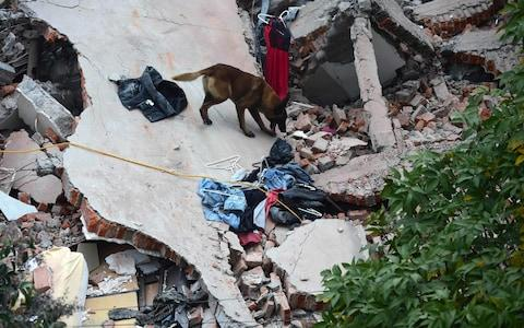 Rescuers with a sniffer dog search for survivors buried under the rubble and debris - Credit: RONALDO SCHEMIDT/AFP/Getty Images