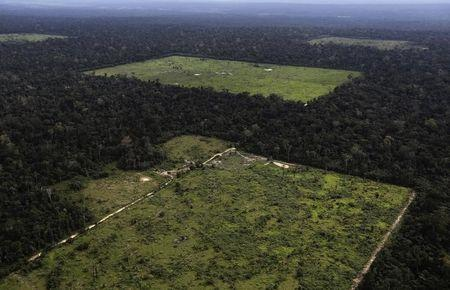 An aerial view shows a tract of Amazon rainforest which has been cleared near Santarem