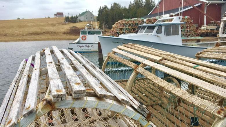 'Perfect day' for fall lobster season launch