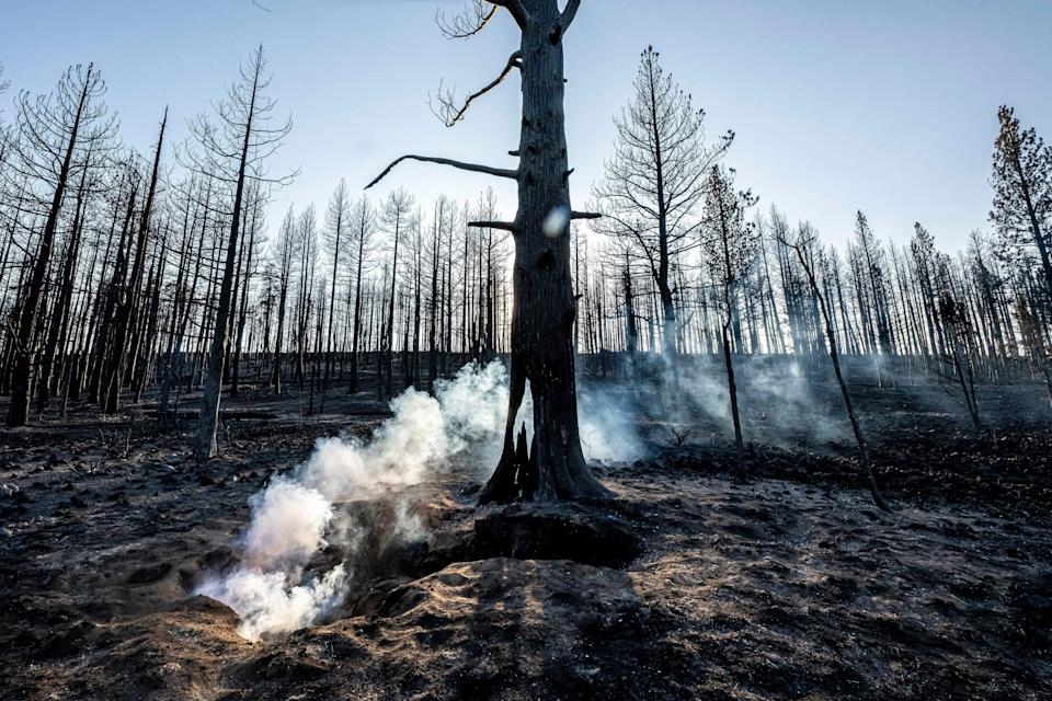 Spot fires smolder near trees damaged by the Bootleg Fire on July 21 in Bly, Ore.