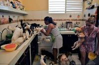 Cuban Noris Perez and her daughter feed cats and dogs at a private animal shelter in Havana -- Cuba will soon pass its first law to protect animal rights