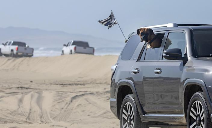 A dog hangs out the window of an SUV on the beach