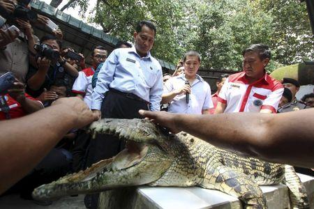 The head of the Indonesia's National Narcotics Board Budi Waseso looks at a crocodile during a visit to a crocodile farm in Medan, North Sumatra