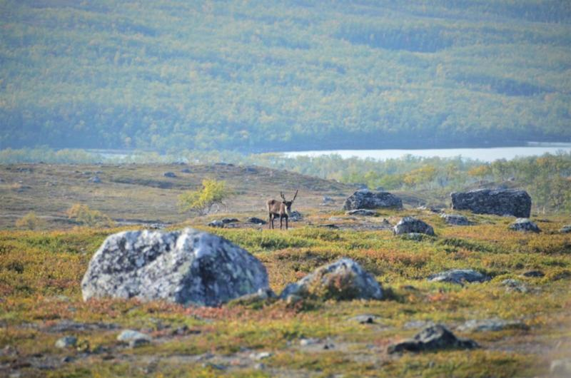 Nearly 40 per cent of the Arctic is greener than in 1986, study says