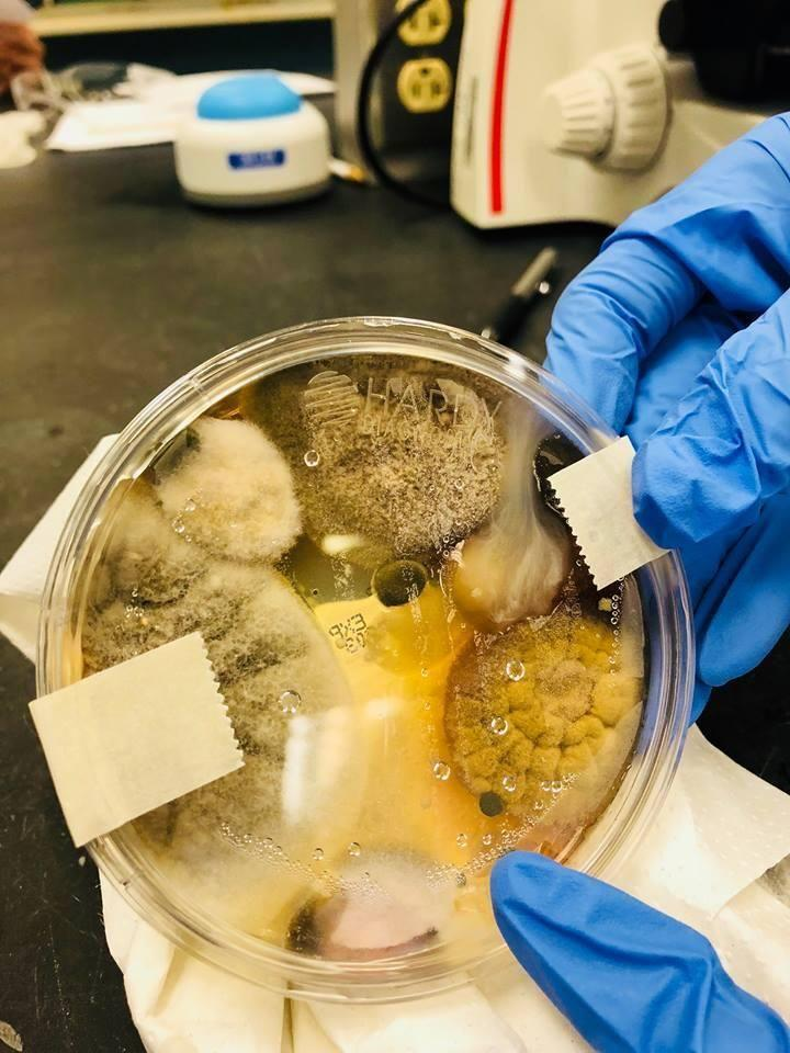 This is the result of a microbiology student's experiment on public hand dryers. Photo: Facebook/Nichole Ward