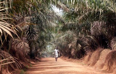 A man walks inside Sime Darby Plantation in Gbah, in Bomi County, Liberia December 30, 2017. REUTERS/Thierry Gouegnon